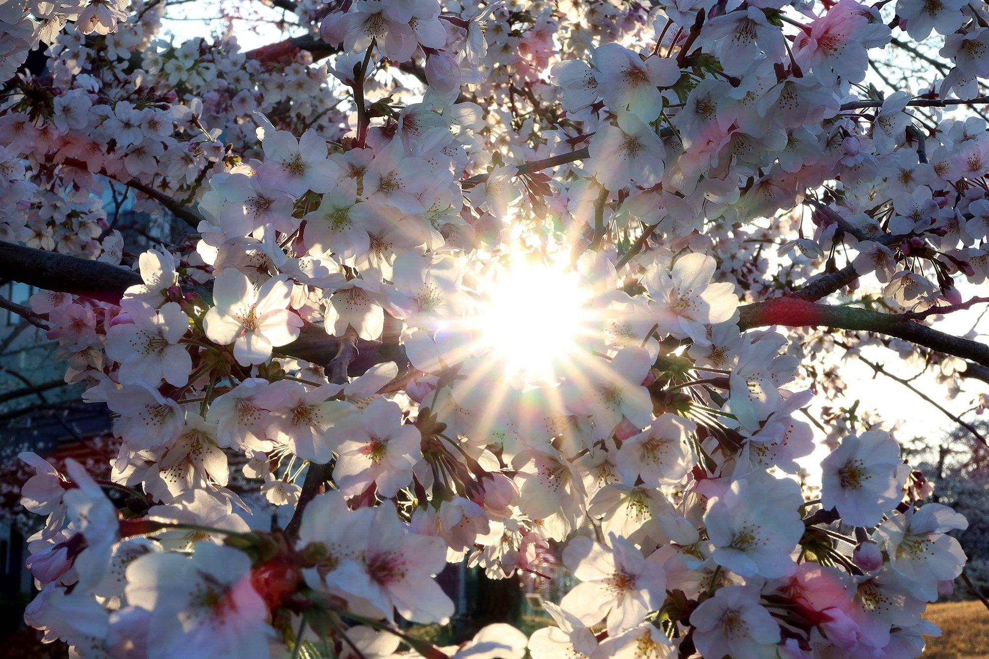 Primavera Solomeo